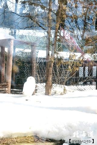 20150308旭山動物園札幌IBIS05.JPG