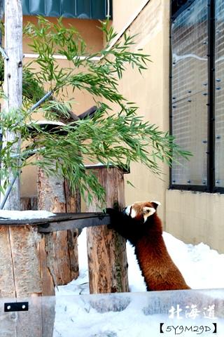 20150308旭山動物園札幌IBIS10.JPG