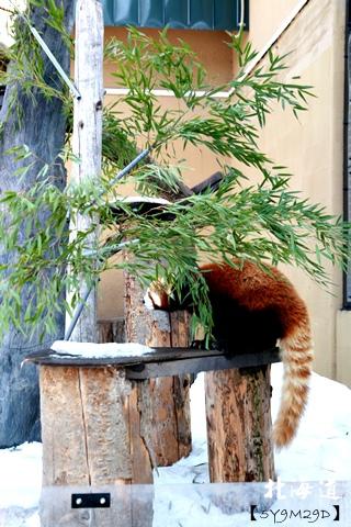 20150308旭山動物園札幌IBIS11.JPG