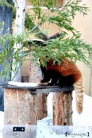 20150308旭山動物園札幌IBIS12.JPG