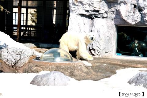 20150308旭山動物園札幌IBIS13.JPG