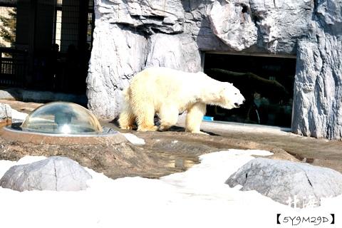 20150308旭山動物園札幌IBIS14.JPG