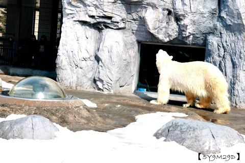 20150308旭山動物園札幌IBIS15.JPG
