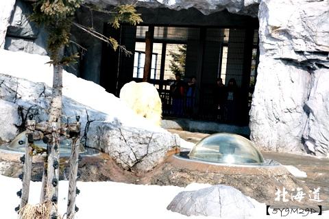 20150308旭山動物園札幌IBIS17.JPG
