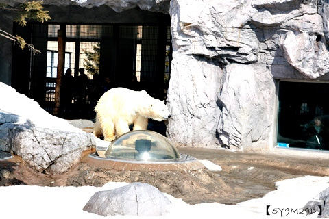 20150308旭山動物園札幌IBIS18.JPG