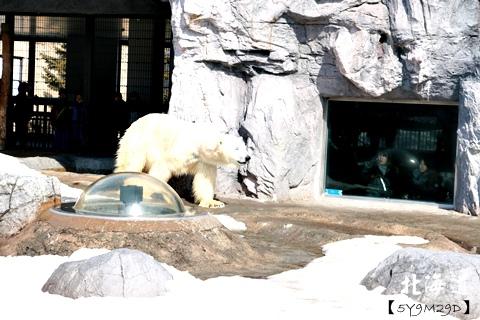 20150308旭山動物園札幌IBIS19.JPG