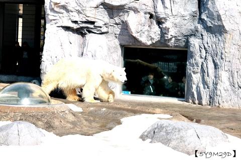 20150308旭山動物園札幌IBIS20.JPG
