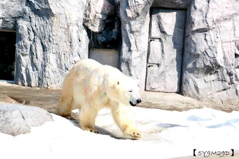 20150308旭山動物園札幌IBIS21.JPG