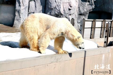 20150308旭山動物園札幌IBIS23.JPG