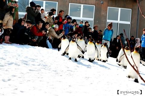 20150308旭山動物園札幌IBIS30.JPG