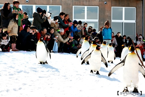 20150308旭山動物園札幌IBIS31.JPG