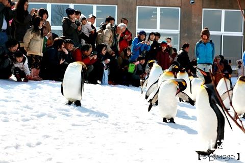 20150308旭山動物園札幌IBIS32.JPG