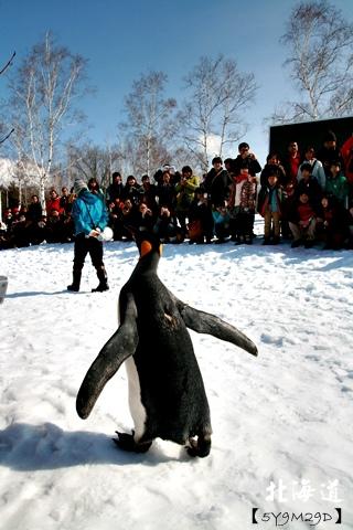 20150308旭山動物園札幌IBIS39.JPG