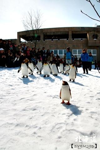 20150308旭山動物園札幌IBIS40.JPG
