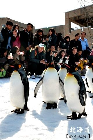 20150308旭山動物園札幌IBIS45.JPG