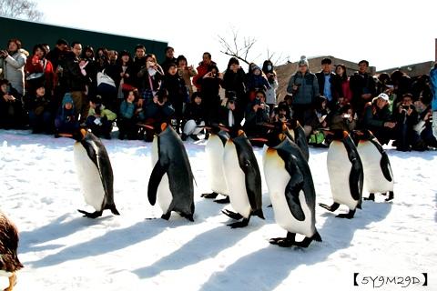 20150308旭山動物園札幌IBIS48.JPG