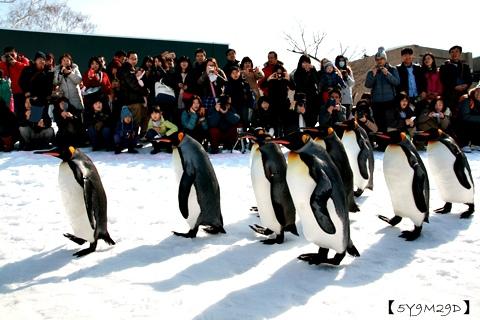 20150308旭山動物園札幌IBIS49.JPG