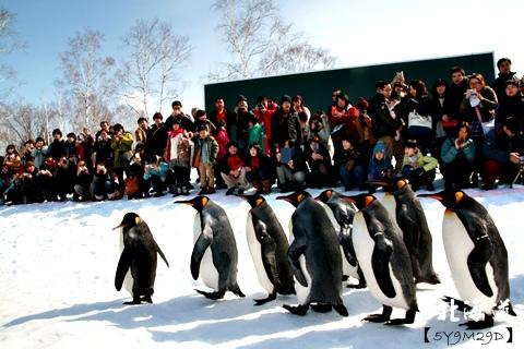 20150308旭山動物園札幌IBIS50.JPG