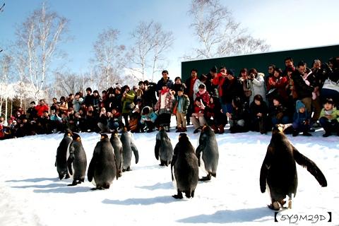 20150308旭山動物園札幌IBIS53.JPG