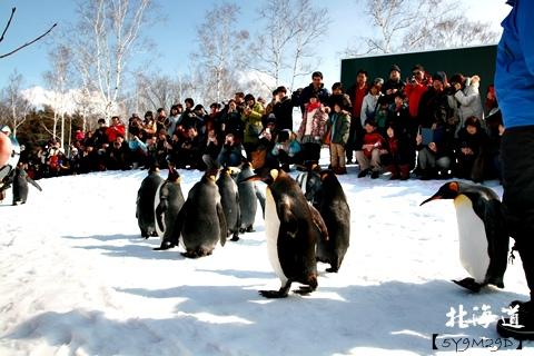 20150308旭山動物園札幌IBIS54.JPG