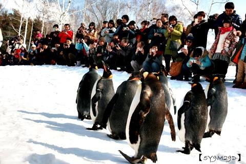 20150308旭山動物園札幌IBIS55.JPG