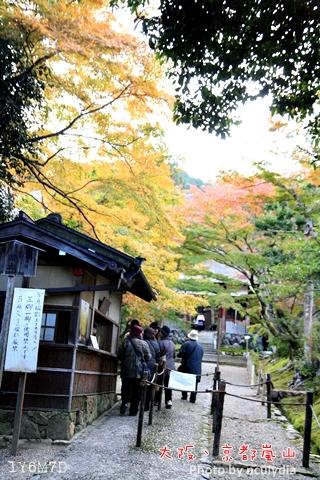 1116嵐山150.JPG
