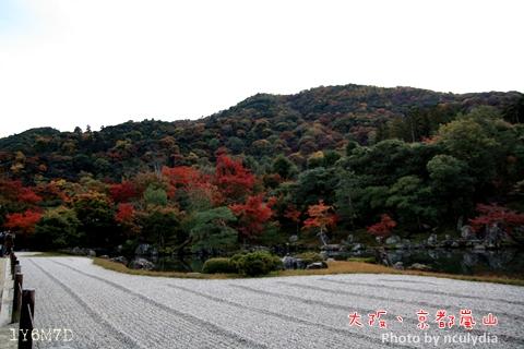 1116嵐山199.JPG