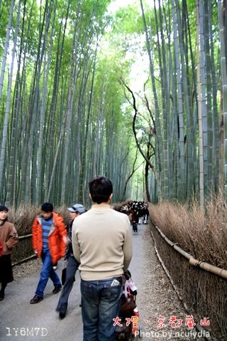 1116嵐山171.JPG