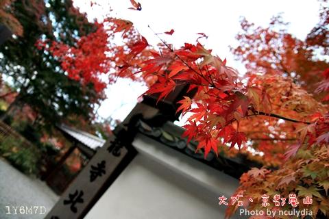 1116嵐山210.JPG