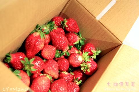 0304大湖採草莓49.JPG