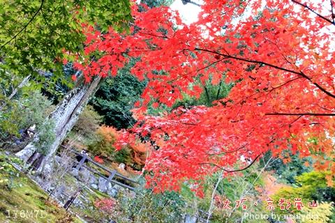 1116嵐山177.JPG