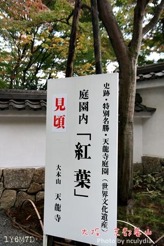 1116嵐山216.JPG