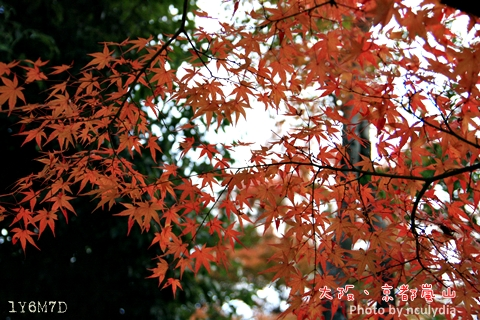 1116嵐山161.JPG
