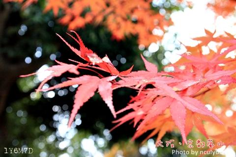 1116嵐山158.JPG