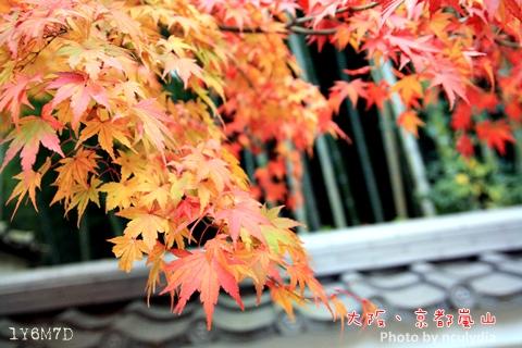 1116嵐山212.JPG