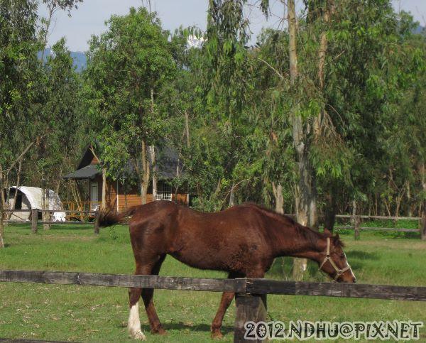 20120213_遠眺奇萊雪景@台11丙騎馬場