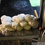20121018_井丸蔥油餅_準備好的麵糰