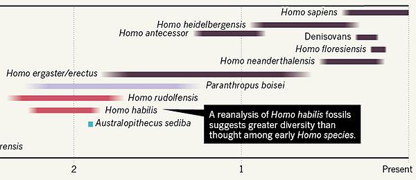 Homo evolution timeline 2