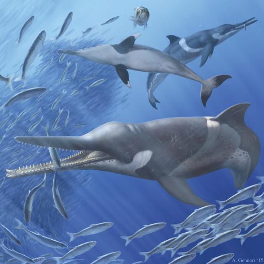 beak whales