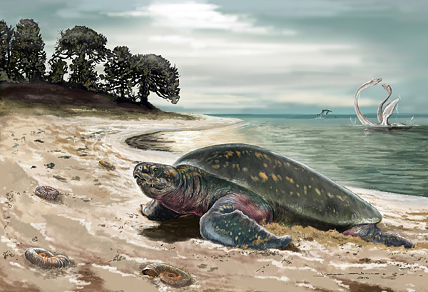 oldest sea turtle
