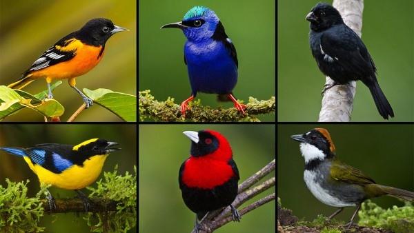 birds diversity