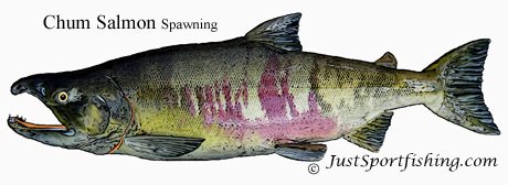 Chum_Salmon_Spawning