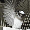 小鳥好累,幾乎一整天都在理毛
