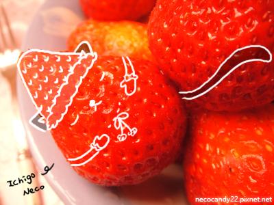 草莓貓真實版