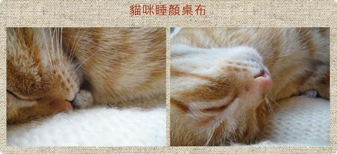 貓咪睡顏桌布下載