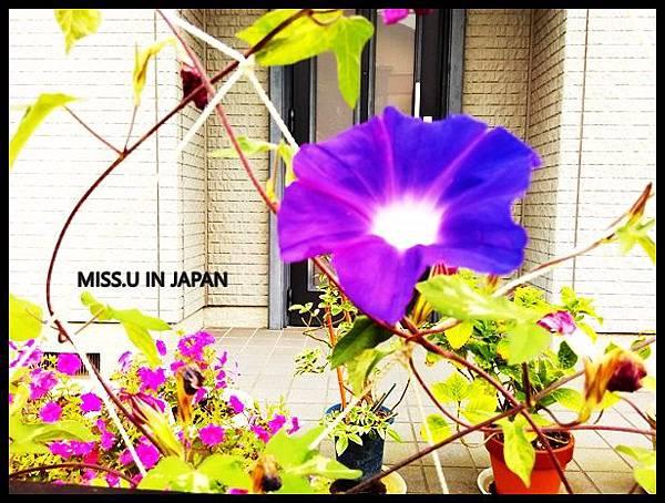 IMG_20160727_132242.jpg