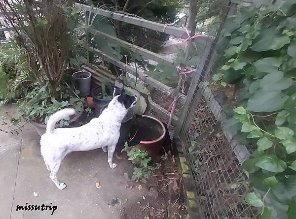 主食犬餐盒 濕狗糧