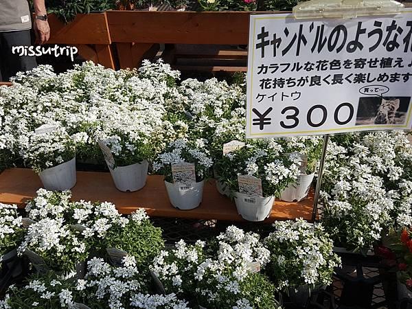 東京足立花園 (1).jpg