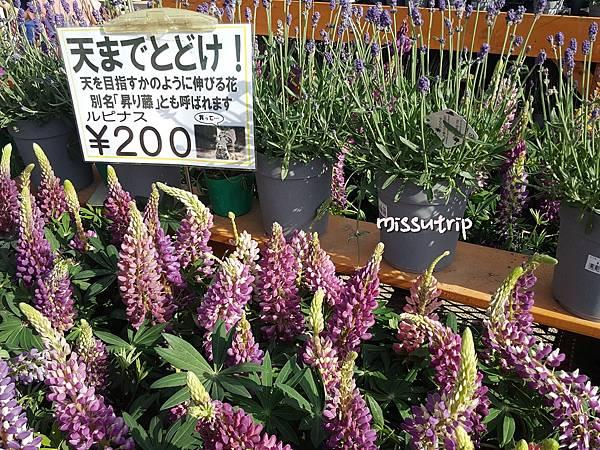 東京足立花園 (3).jpg