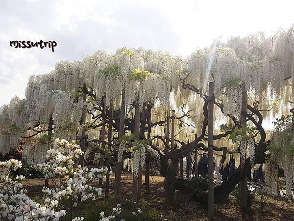 東京足立花園 (6).jpg
